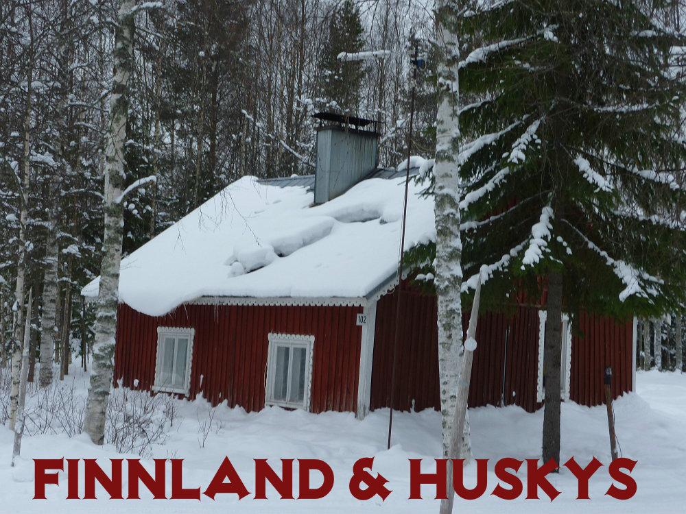 finnlandhuskys-1