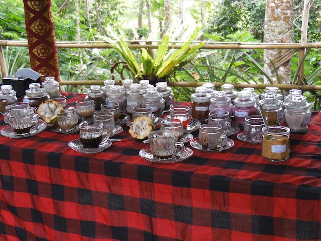 Bali Kaffeplantage52