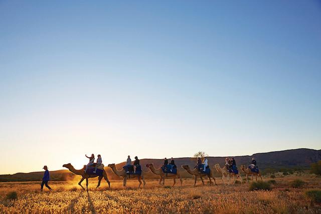 Camel Tour, Pyndan Camel Tracks